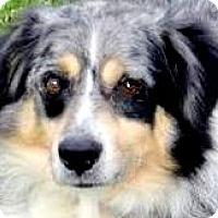 Adopt A Pet :: ALEX(OUR