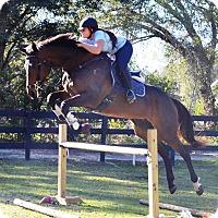 Thoroughbred Mix for adoption in Lutz, Florida - Cadance
