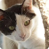 Adopt A Pet :: Nougat - West Palm Beach, FL