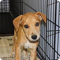 Adopt A Pet :: Andy - Philadelphia, PA