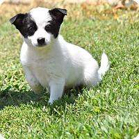 Adopt A Pet :: Eddie - Groton, MA