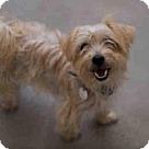 Adopt A Pet :: SAMMY