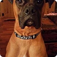 Adopt A Pet :: Parker - Jacksonville, AL