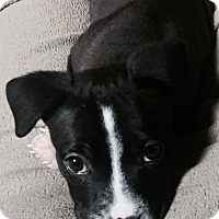 Adopt A Pet :: Doug - Philadelphia, PA