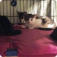 Adopt A Pet :: Paula, Joanna, Georgina - Brooklyn, NY