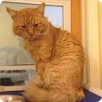 Adopt A Pet :: Norse - Salisbury, MA
