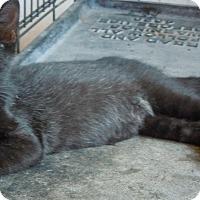 Adopt A Pet :: Lincoln - Creston, IA