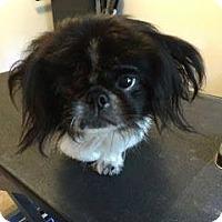 Adopt A Pet :: Spike - Ft. Lauderdale, FL