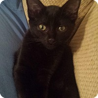 Adopt A Pet :: SABRINA - Winterville, NC