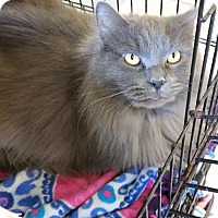 Adopt A Pet :: Biggs - Chippewa Falls, WI