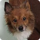 Adopt A Pet :: Foxx