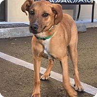 Adopt A Pet :: Jasper - Cashiers, NC
