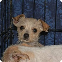 Adopt A Pet :: Rose and Pansy - Phoenix, AZ