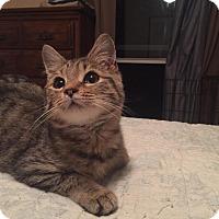 Adopt A Pet :: Simon - Gainesville, FL