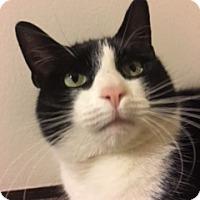 Adopt A Pet :: Nala - Sherman Oaks, CA