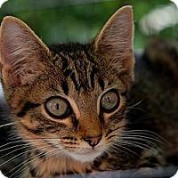 Adopt A Pet :: River - Brooklyn, NY