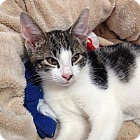 Adopt A Pet :: Luke - Island Park, NY