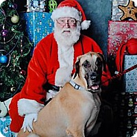 Adopt A Pet :: MERRY CHRISTMAS - Phoenix, AZ