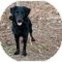 Adopt A Pet :: Dundee - Denver, CO