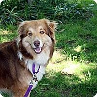 Adopt A Pet :: Bravo - PENDING - Savannah, GA
