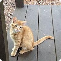 Adopt A Pet :: Colby - Monroe, GA