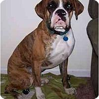 Adopt A Pet :: Buster - Navarre, FL