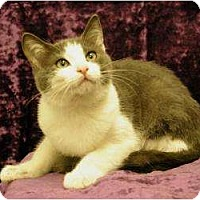 Adopt A Pet :: John - Sacramento, CA