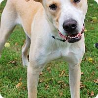 Adopt A Pet :: King - Rochester/Buffalo, NY
