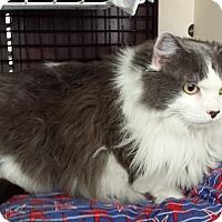 Adopt A Pet :: Miranda - Walkersville, MD