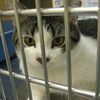 Adopt A Pet :: Kozmos - Logan, UT