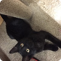 Adopt A Pet :: Ashley - McHenry, IL