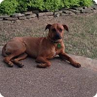 Adopt A Pet :: Abear - Byhalia, MS