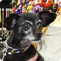 Adopt A Pet :: Pepper,too - Memphis, TN