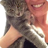 Adopt A Pet :: Quack Quack - McDonough, GA