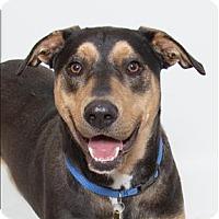 Adopt A Pet :: Techno - San Luis Obispo, CA