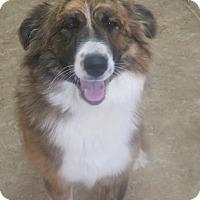 Adopt A Pet :: Kira - Clear Lake, IA