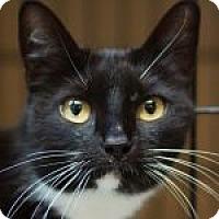 Adopt A Pet :: Sox - Medford, MA