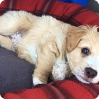 Adopt A Pet :: Colin D4093 - Fremont, CA