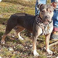 Adopt A Pet :: Ruby(L)(55 lb) Loves Kids! - SUSSEX, NJ