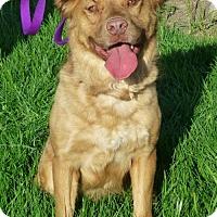 Adopt A Pet :: Jasper - Anaheim, CA