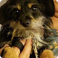 Adopt A Pet :: Jazzy & Laddie - Freedom, PA