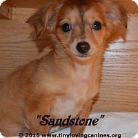 Adopt A Pet :: Sandstorm - Simi Valley, CA