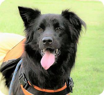 Border Collie Mix Dog for adoption in San Francisco, California - Beckham
