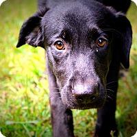 Adopt A Pet :: Wendy - Glastonbury, CT