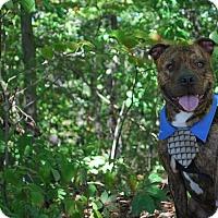 Adopt A Pet :: Jaxon - New Castle, PA