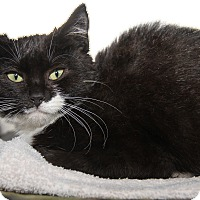 Adopt A Pet :: Era (Spayed) - Marietta, OH