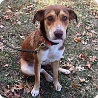 Adopt A Pet :: JOLENE - Coeburn, VA