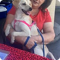 Adopt A Pet :: Blossom (MC) - Santa Ana, CA