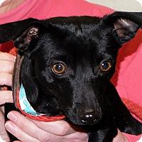 Adopt A Pet :: Peter - Spokane, WA