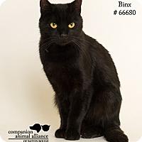 Adopt A Pet :: Binx - Baton Rouge, LA